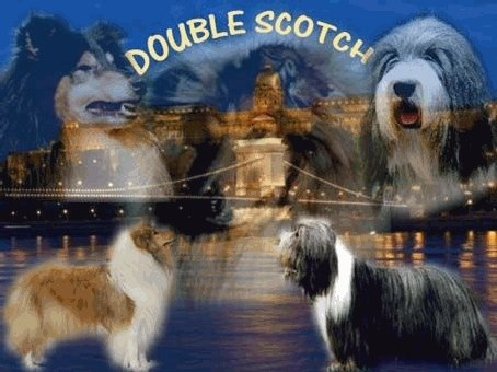 DOUBLE SCOTCH COLLIE, BEARDED COLLIE KENNEL